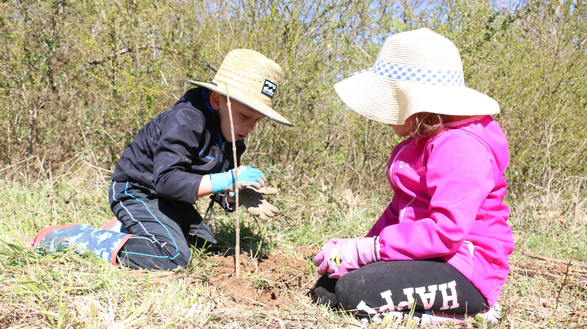 Kids planting a tree seedling for tree day