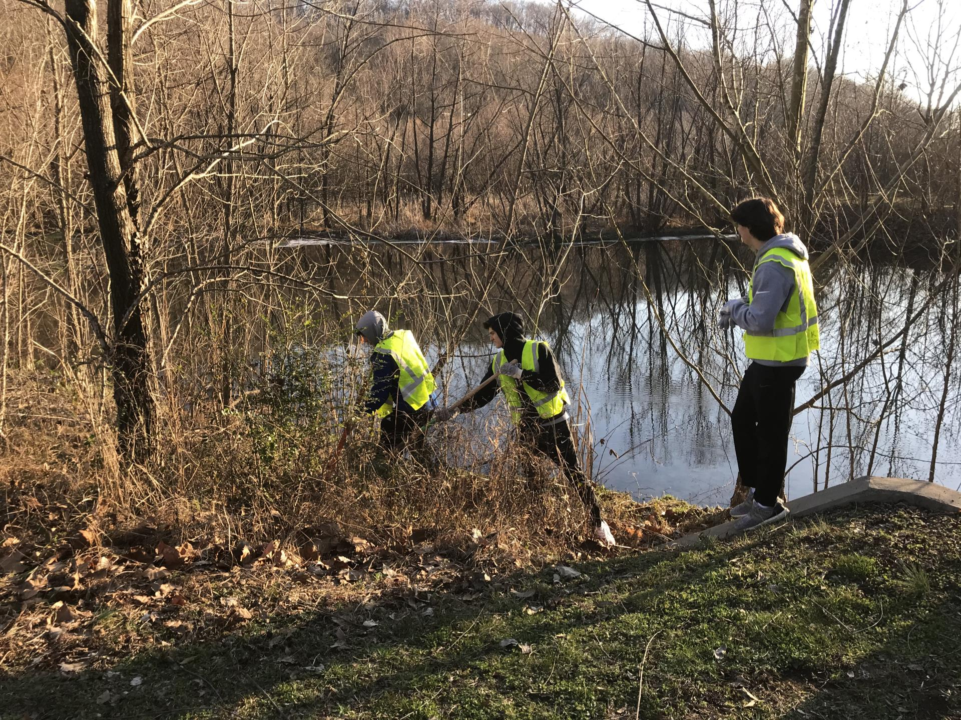 High school kids removing invasives at dry branch wetland